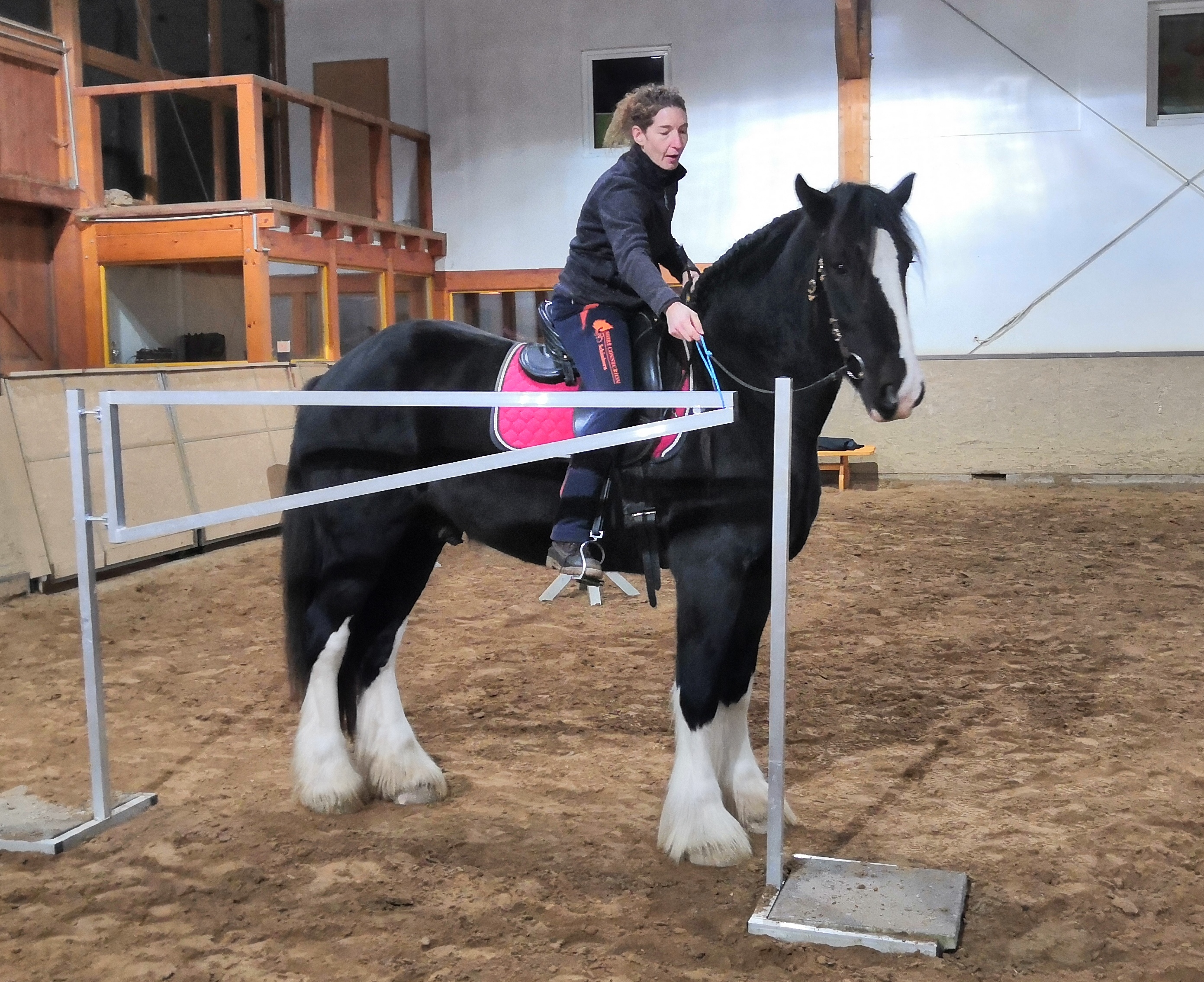 Working Equitation Shire